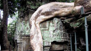Ta Phom, Angor, Cambodia